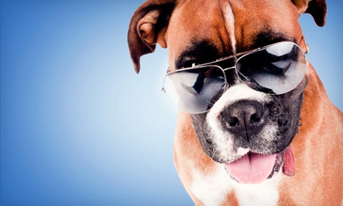 Animal Supply House - Multiple Locations: $12 for $25 Worth of Pet Food and Supplies at Animal Supply House
