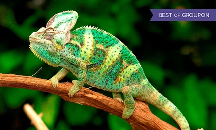 Tropical Butterfly House, Wildlife and Falconry Centre: Animal Experience and Park Entry for Up to Four (Up to 51% Off)