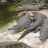 Up to 42% Off Adventure Package at Gator Country