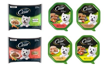 Fino a 28 confezioni di cibo per cani disponibili in vari gusti