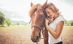 Reflections Coaching: Tiergestütztes Training für Kommunikation, Bewerbung oder Existenzgründung bei Reflections Coaching (bis zu 89% sparen*)