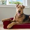 Sofa-Style Cooling-Gel Memory-Foam Pet Dog Bed