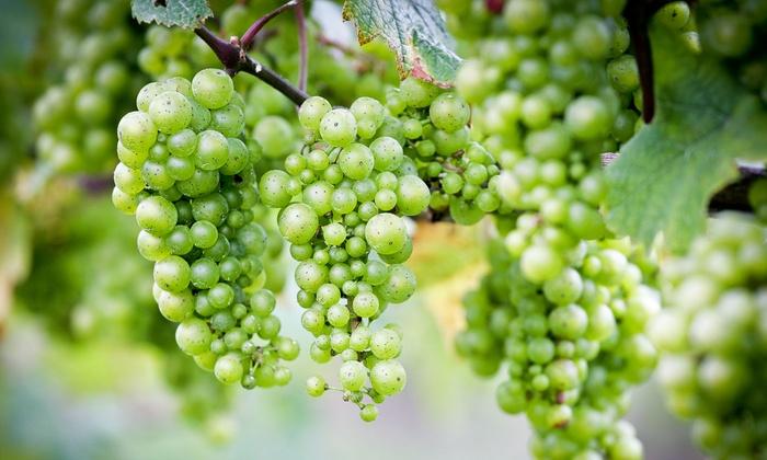 Free Run Cellars - Berrien Springs: Wine Tasting for Two or Four at Free Run Cellars (50% Off)