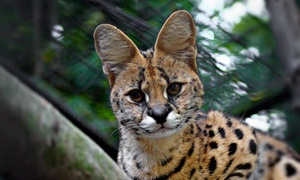 Up to 39% Off Admission to Brandywine Zoo at Brandywine Zoo, plus 6.0% Cash Back from Ebates.