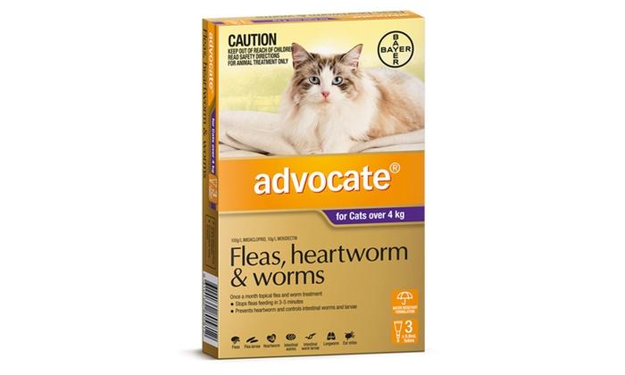 best flea medicine for kittens