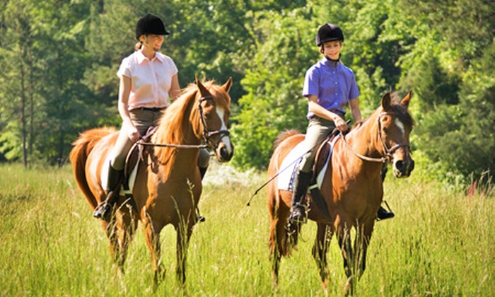 Halsall Riding - Halsall Riding & Livery Centre: Horse Riding: 90-Minute Hack For One (£18) or Two (£34) People at Halsall Riding