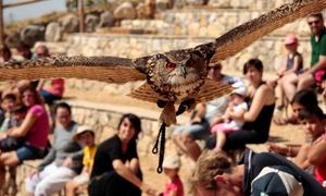 Zoo del Pirineu: Entrada al Zoo del Pirineu para adulto y niño con opción a visita guiada y espectáculo de vuelo de aves desde 3,90 €