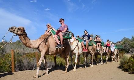 Bono de 2 o 4 paseos en camello para hasta 4 personas en Manicaball Eventos (hasta 50% de descuento)