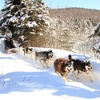 Dogsledding and Snowshoeing