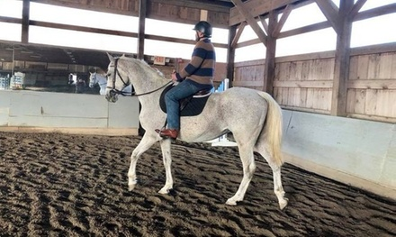 Daily Deal Offer Quiet Rein Farm Two Or Four 60 Minute Horseback Riding Lessons At Quiet Rein Farm Up To 67 Off Dealyte