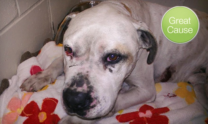 Humane Society for Hamilton County: $10 Donation for Abused or Neglected Animals