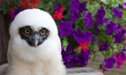 90-Minute Owl Experience for One, Two or Family of Four at UK Owl and Raptor Displays (Up to 72% Off)
