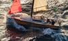 Caorle: escursione in barca a vela
