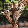 Entrée pour un parc zoologique