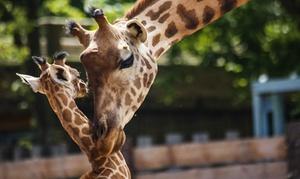 Touroparc zoo: 1 entrée adulte ou enfant à 14 € au Touroparc zoo