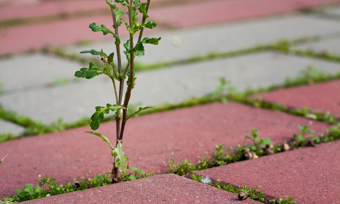 Teva Landscaping - Philadelphia: $49 for $100 Worth of Hard Surface Weed Control Application at Teva Landscaping