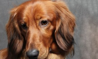 """Pet Photoshoot with Five 7"""" x 5"""" or Ten 6"""" x 4"""" Prints at Alex Styles Photography (93% Off)"""