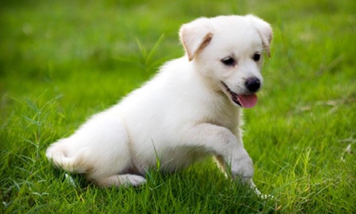 dog boarding winston salem
