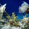 Biscayne National Underwater Park - Homestead: Boating, Snorkeling and More at Biscayne National Underwater Park in Homestead (Up to $45 Value). Two Options Available.