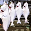Up to 52% Off Guided Fishing Charters in Ninilchik