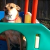 Up to 76% Off Dog Services in Edwardsville
