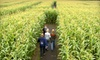 Lacombe Corn Maze Inc. - Lacombe: $11 for a Fall Outing to Kraay Family Farm in Lacombe (Up to $23.50 Value)