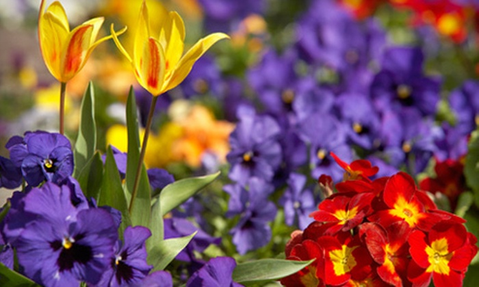 Eagle Creek Nursery - Trader's Point: $25 for $50 Worth of Plants and Gardening Supplies at Eagle Creek Nursery