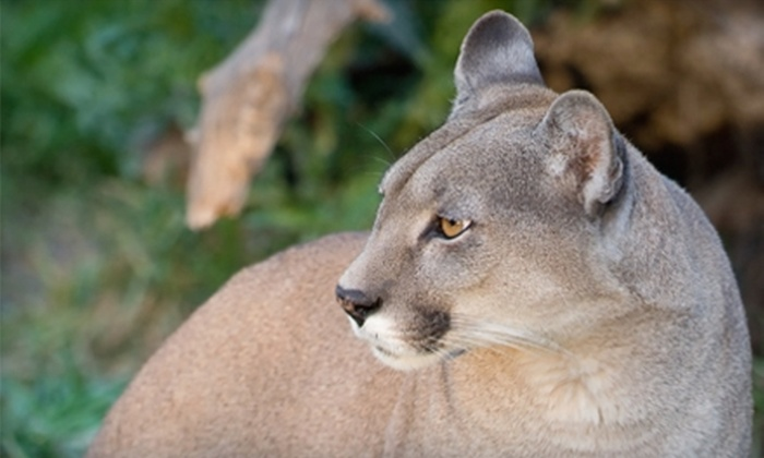 Mill Mountain Zoo - Mill Mountain: $7 for Two Admissions at Mill Mountain Zoo (Up to $15 Value)