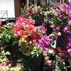 Half Off Plants at Beyond Paradise Nursery