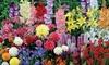 Collection massif d'été fleuri de 90 ou 135 bulbes
