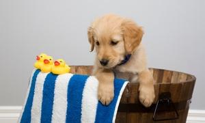 Centro Veterinario Finca Roja: Revisión veterinaria y sesión de peluquería para perros hasta 30 kg desde 14,90 €