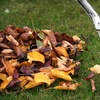 51% Off Yard Cleanup from Worry Free Lawn Care