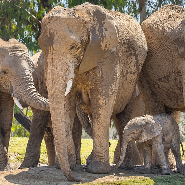 1-Day Pass for Adult or Child at San Diego Zoo Safari Park