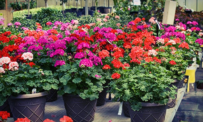 Bloom Nursery - Bloom Nursery: Plants and Garden Supplies or Landscaping Services from Bloom Nursery (Up to 63% Off)