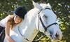 Elite Equestrian - San Juan Capistrano: $99 for Four Horseback-Riding Lessons at Elite Equestrian in San Juan Capistrano ($220 Value)
