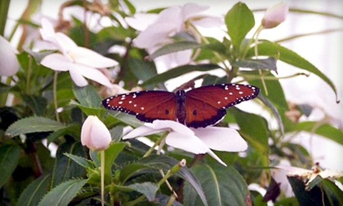 The Butterfly House - Whitehouse: $16 for Four Tickets to The Butterfly House (Up to $32 value)