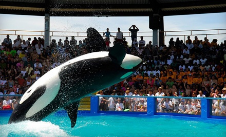 1 Child Admission to Monster Splash & and an All-Day Seaquarium Pass (up to a $29.90 value) - Miami Seaquarium in Miami