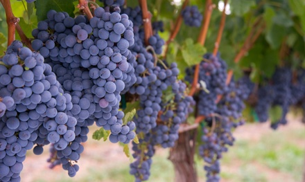 $119 for One-Year Ownership of Two Vines at Carneros Della Notte ($198 Value)