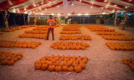 Attraction Tickets, Pumpkin, and VIP Package at Mr. Jack O' Lanterns Pumpkins on October 4–31 (Up to 49% Off)