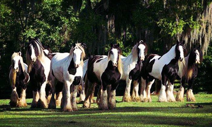 The Gypsy Gold Farm - Ocala: Horse-Farm Walking Tour for One, Two, or Four at The Gypsy Gold Farm (Up to 56% Off)