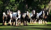 Up to 56% Off Horse-Farm Walking Tour
