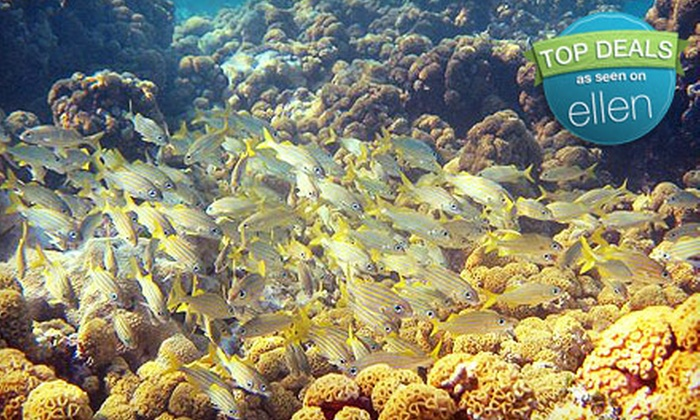 Looe Key Reef Resort and Dive Center - Ramrod Key: Full-Day Snorkeling or Diving Trip for Two from Looe Key Reef Resort and Dive Center in Ramrod Key (Half Off)