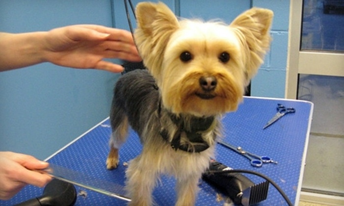Dogtopia of Omaha - Richland II: $20 for $40 Worth of Boarding, Daycare, and Dog-Grooming Services at Dogtopia of Omaha in La Vista