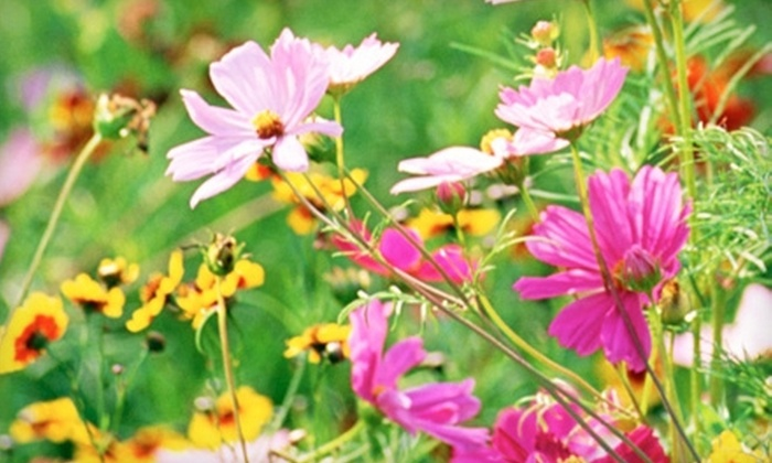 Indian Trails Native Nursery - Homeland: $10 for $20 Worth of Plants, Trees, and Shrubs at Indian Trails Native Nursery in Lake Worth