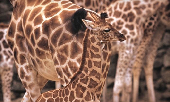 Giraffe Ranch Farm Tours - Dade City: Game-Viewing Safari Tour or Camel-Riding Expedition at Giraffe Ranch Farm Tours. Four Options Available.