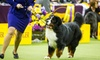 Westminster Kennel Club Dog Show – Up to $20.80 Off