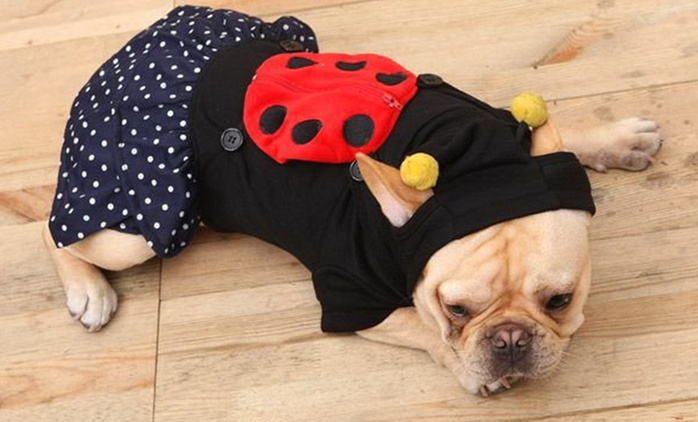$20 Ladybug Costume for Dogs