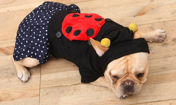 New Zealand Trading Solutions: $20 Ladybug Costume for Dogs
