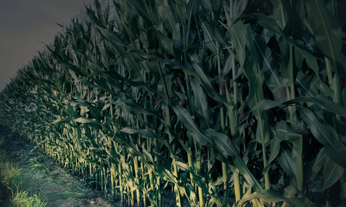 Westhaven Farm - Allentown: Flashlight Corn-Maze Visit for Two or Four with Donuts and Cider at Westhaven Farm (40% Off)