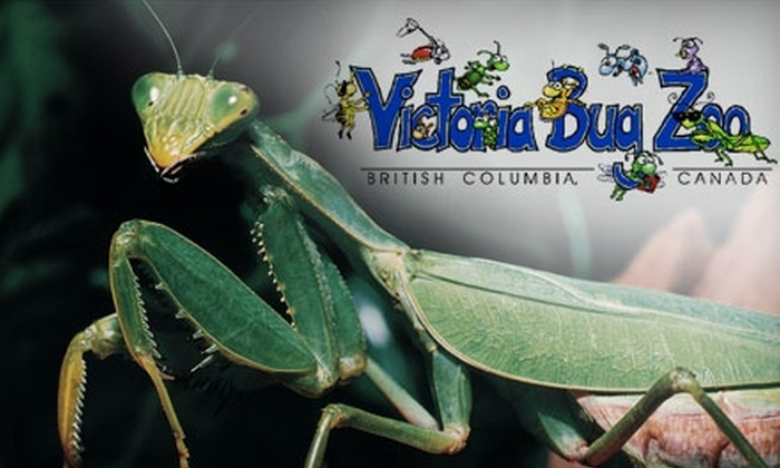 Victoria Bug Zoo - Downtown: $12 for an Annual Pass to Victoria Bug Zoo ($25 Value)
